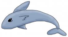 Shark jpg
