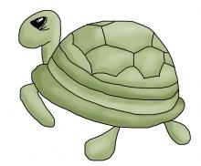 Turtle jpg