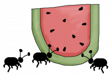 Watermelon ants png